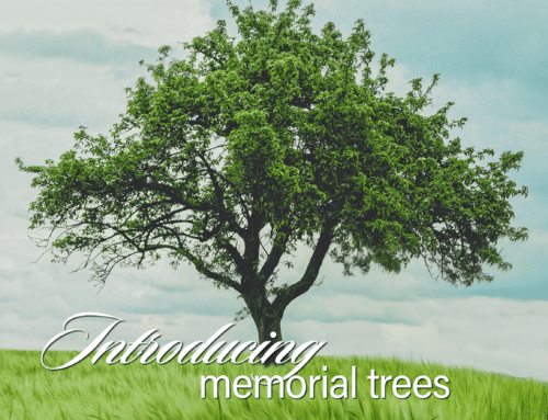 Reforest America with Memorial Trees